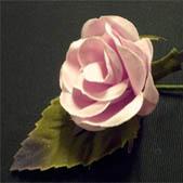 Baby Rose Blush