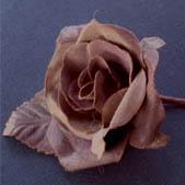 Baby Rose Brown