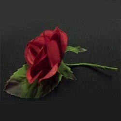 Baby Rose Main 1
