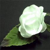 Baby Rose White 1