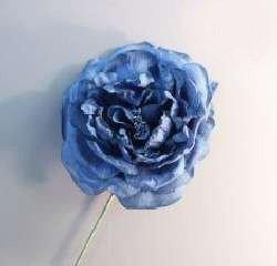 Elegance Rose