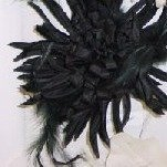Feather Chrysanthemum Blk