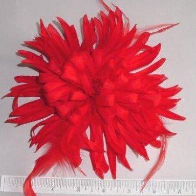 Feather Chrysanthemum Main