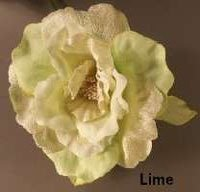 Lime Avalon Rose
