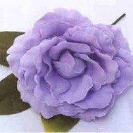 Old Fashion Lavender Rose