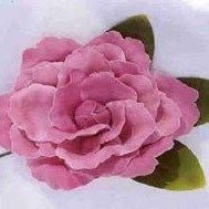 Old Fashion Rose Rose