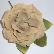 Old Fashion Taupe Rose