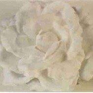 Old Fashion White Rose