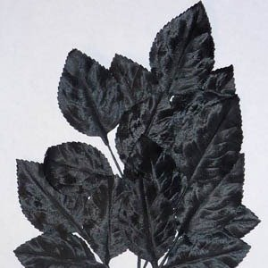Polished Vintage Leaf Spray Black A