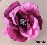 Purple Avalon Rose
