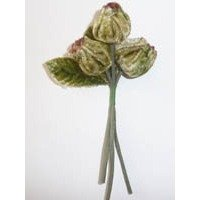 Velvet Buds Moss