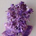Velvet Lilacs Lilac