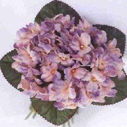 Velvet Violet PinkViolet