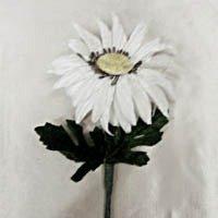 Vintage Daisy White