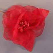 Whisper Rose Red