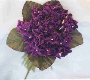 Velvet Violets