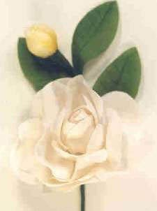 White Cotton Rose With Bud